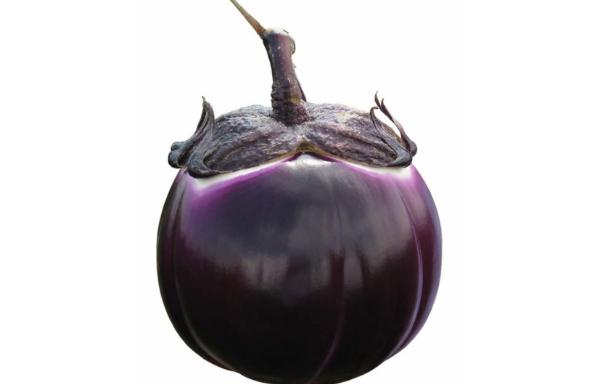 Melanzana Calice Nero